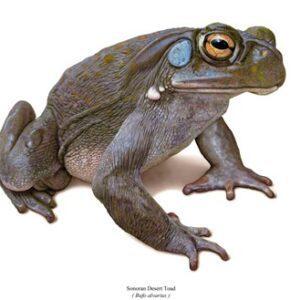 Amphibians And Tuatara
